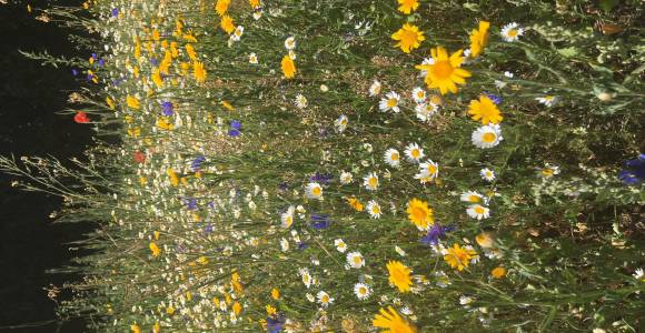 Wildflower Area Picture 3
